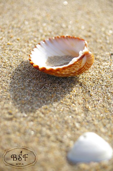 beach BSF.JPG